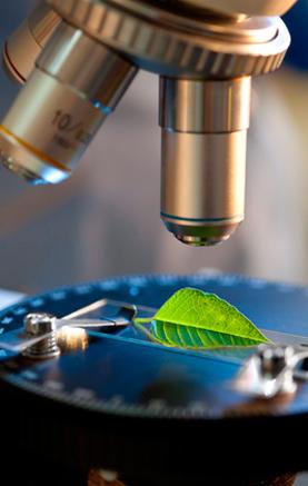 L'efficacité des plantes
